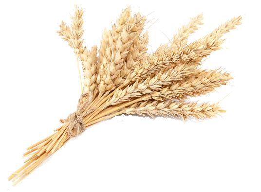 Domus Brauhaus koren