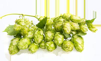 Domus Brauhaus hop